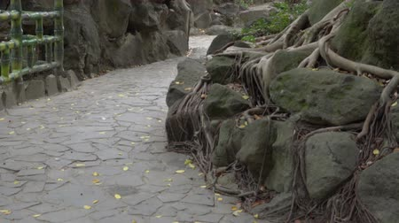 Roots, stones, dirt and fallen leaves in the park. Natural landscape in Asia.
