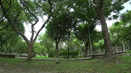 tijolos : The view of park in the city. Natural scenery in Asia.