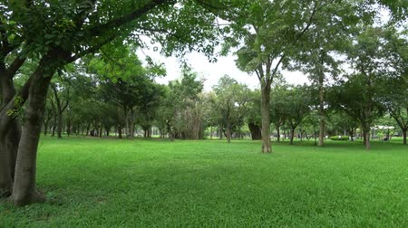 The view of park in the city. Natural scenery in Asia.