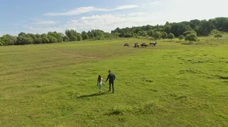 cow flies : aerial view of couple walking on the grass cows in the background