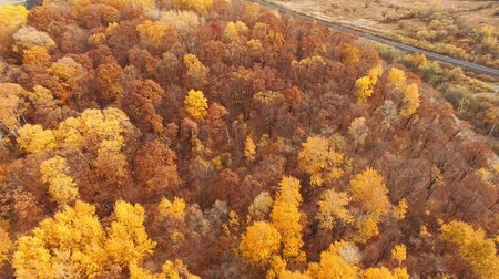 esplendor : top aerial view on forest of Autumn colors