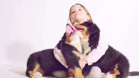 taranmamış : Girl and two puppies of a bernese shepherd dog Stok Video