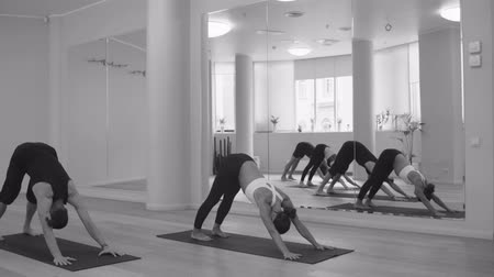 complexo : Yoga class. People practicing yoga. Surya namaskar Stock Footage