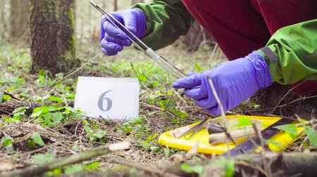 conservationist : Scientist ecologist in the forest taking samples of plants Stock Footage