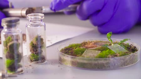 liken : The scientist taking out samples from petri dish. Stok Video