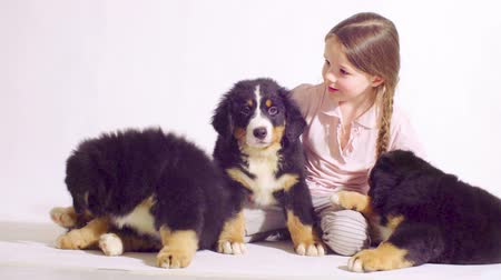 домашнее животное : Girl and three puppies of a bernese shepherd dog