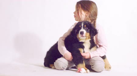 taranmamış : Girl and puppy of a bernese shepherd dog