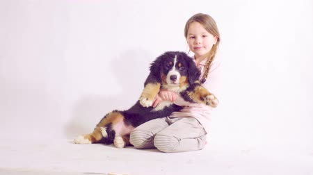 juhászkutya : Girl and puppy of a bernese shepherd dog