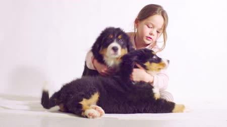 chlupatý : Girl and two puppies of a bernese shepherd dog Dostupné videozáznamy
