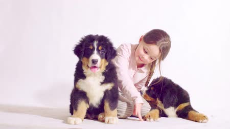 juhászkutya : Girl and two puppies of a bernese shepherd dog Stock mozgókép