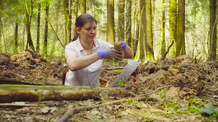 лопата : Woman ecologist in the forest digging a soil slit Стоковые видеозаписи