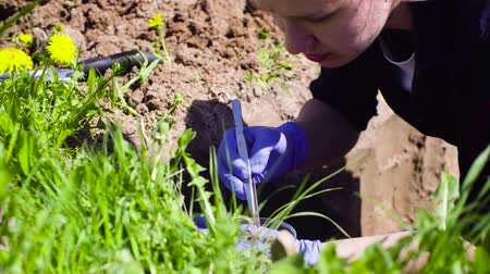 naturalist : Scientist ecologist on the meadow taking samples of soil Stock Footage
