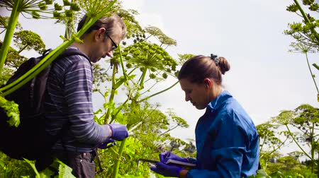 conservationist : Environmentalists man and woman examining plant Stock Footage