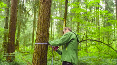 naturalist : The ecologist in a forest measuring a tree trunk Stock Footage