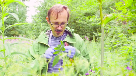 naturalist : The ecologist in a forest examining plant