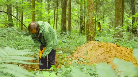 znečištěné : Scientist ecologist in a forest digging soil slit
