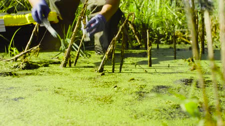 swamp : Woman ecologist taking samples of water