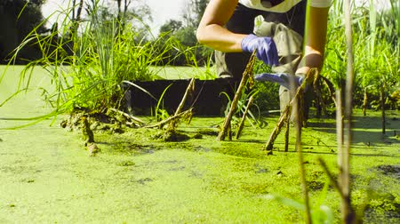 naturalist : Woman ecologist taking samples of duckweed