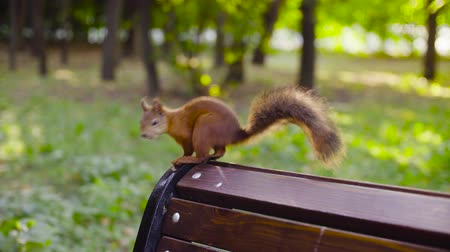 gnawer : Cute Red Squirrel sitting in a park
