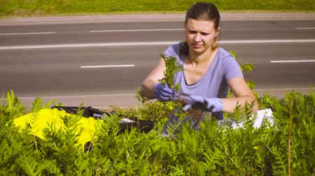 conservationist : Woman ecologist getting samples of plants near highway.