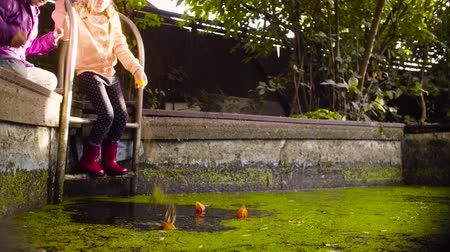 dacha : Two girls playing near the old pool overgrown with duckweed Stock Footage