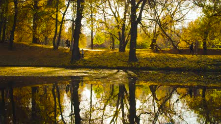 yansıyan : Autumn, lake in the park, colorful trees reflected in the water