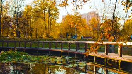 Autumn landscape, lake in the park. Fall season
