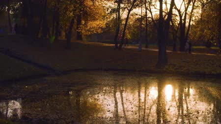 Sunset. Lake in the park in autumn Dostupné videozáznamy