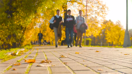 Tile on the road in the park, on it are colored leaves. Autumn season. Dostupné videozáznamy
