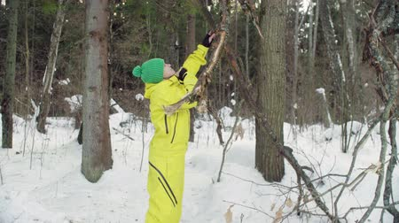 environmentalist : Ecologist examines a damaged tree in the forest.