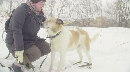 diseased : Woman volunteer stroking a disable dog Stock Footage