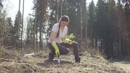 felling : Young activist plants a small fir-tree Stock Footage
