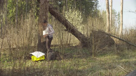 felling : Ecologist in the forest measuring damage tree