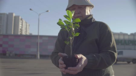 activist : Senior activist holding young tree in the city Stock Footage
