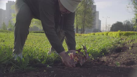 sorumluluk : Senior green activist planting a flower in a city