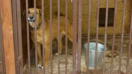 domestic animals : Dogs in cages in a dogs shelter