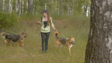 birch tree : Two women volunteer walking with a dogs Stock Footage