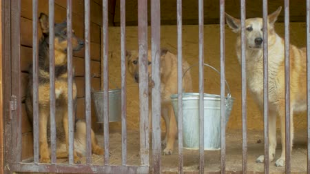 enclosure : Cute dogs in cages in a dogs shelter