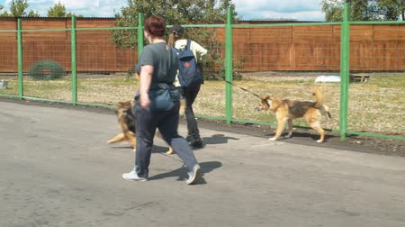enclosure : Two women volunteers walking with the dogs