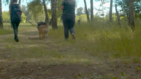 volunteering : Volunteers walking with the dogs on a forest road Stock Footage