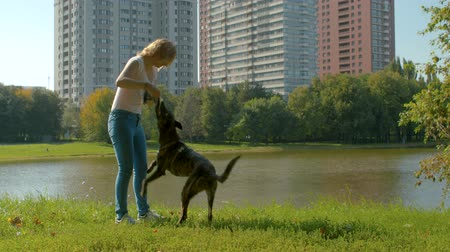 fiel : Young dogs trainer with a dog in a park