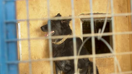 trançado : A dog in its cage at a animal shelter Stock Footage