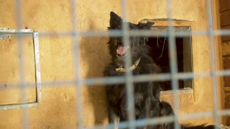 задумчивый : Mongrel dog in its cage at a shelter Стоковые видеозаписи