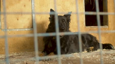unloved : Sad dog lying in its cage in a shelter