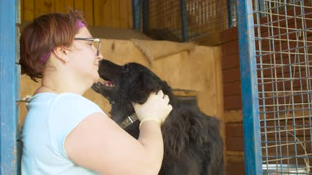 grating : Woman volunteer caress a dog in a shelter