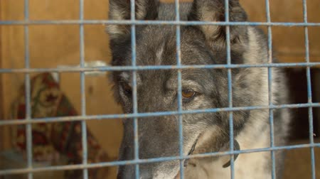 enclosure : Sad face of a dog in a cage