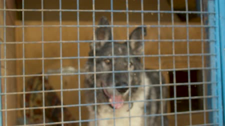 enclosure : Sad dog in a cage at a animal shelter