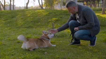 obediente : The man and the corgi dog on the lawn
