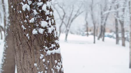 Snowfall. Close up tree trunk in the snow. Snow falling on the ground. Winter background