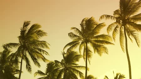пальмовые деревья : Vibrant colors moving with the wind palm trees summertime sunset landscape.
